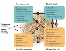 Harnessing rhizosphere microbiomes for drought-resilient